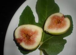 fresh figs-closeup