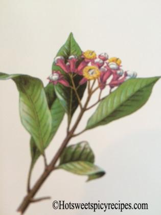 clove plant